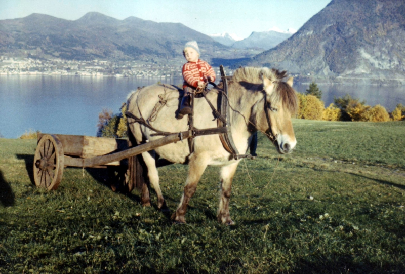 hestkongsvolledit